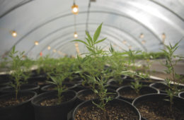 Alaska Legalizing Hemp