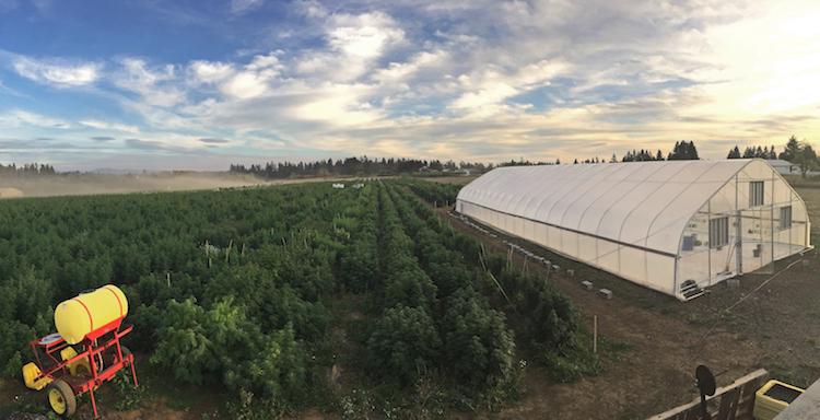Oregon Fusion Farm Hemp