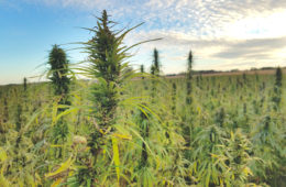Hemp Amendments Farming Bill HEMP