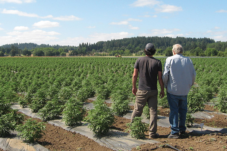 In Oregon, a Marijuana Exodus Creates a Hemp Renaissance