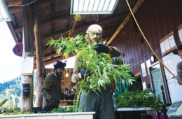 East Fork Cultivars Oregon Hemp Marijuana Farmers