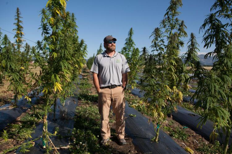 small farmers, Montana hemp, hemp, CBD flower