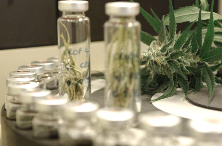 FDA Approval DEA Hemp Epidiolex