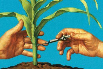 Hemp Cannabinoid Science Enlightenment